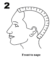 From forehead to nape of neck